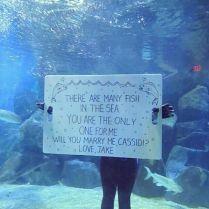 4. Propose in an fish aquarium at the zoo!