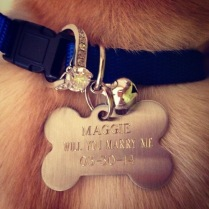 7. Put the ring on your dog and propose! Love this idea!